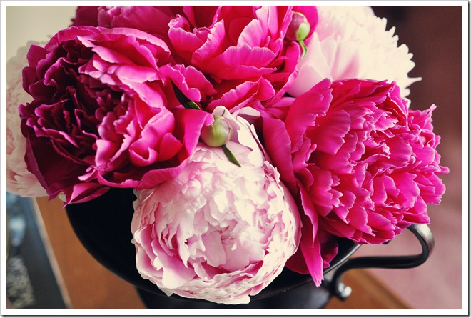 pot of peonies