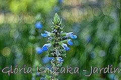 Glória Ishizaka - Jardim Botânico Nagai - Osaka 40