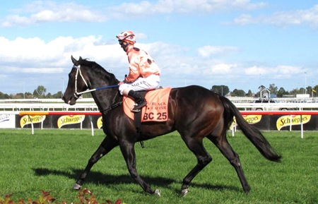 black caviar _parade