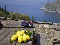 AMALFI - LANDSCAPE LEMONS & WALKING STICKS.