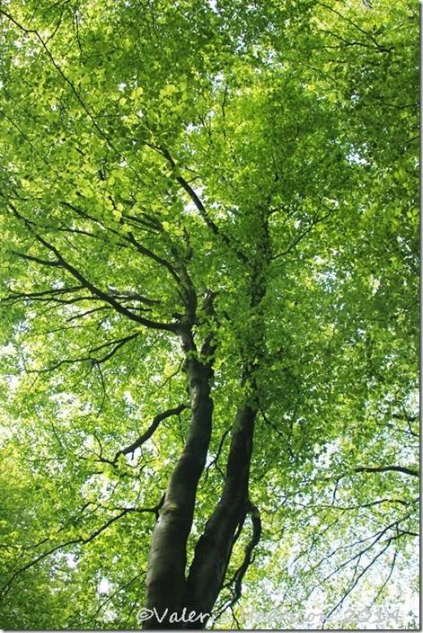 5-trees