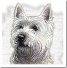 Westie-1