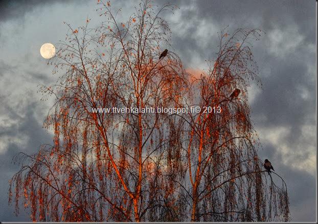 kuu vaikset sadepilvi 008