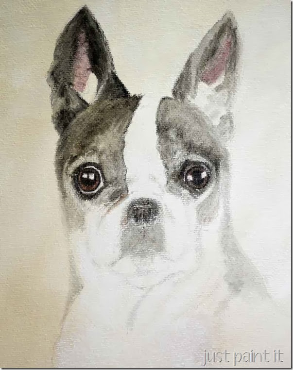 boston-terrier-sketch-E