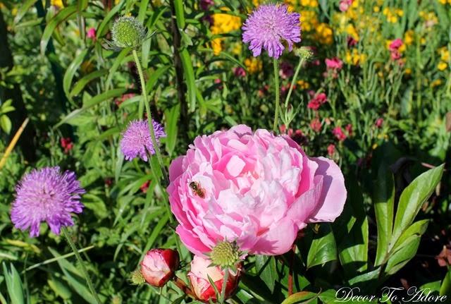 Monet's Garden 011