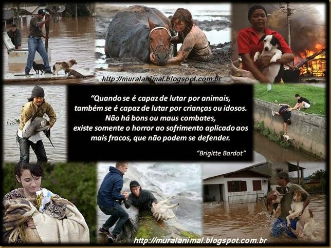 protetor-animais (3)