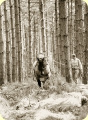 horse extracting timber