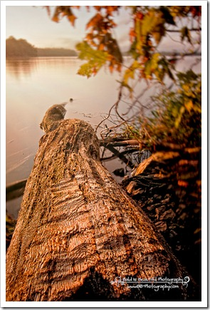 Pooles Knob Sunrise_-6