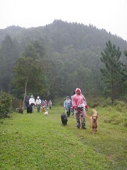 Dogs Trekking 4 (250)