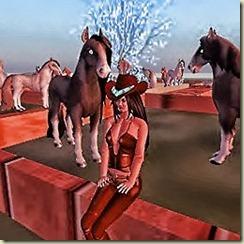 Hayati's Horse Ranch in Wharf