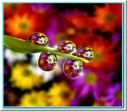 Gotas de felicidade (2)