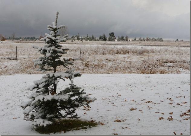 snow 038
