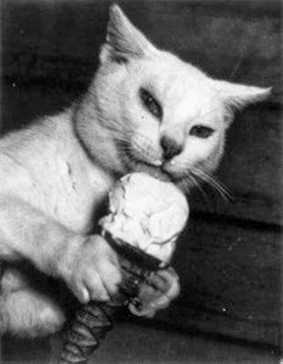 cat-ice-cream-233x300