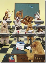 animals_in_class_room_funny