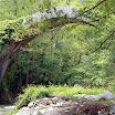 primavera_16_20101008_1121121729.jpg
