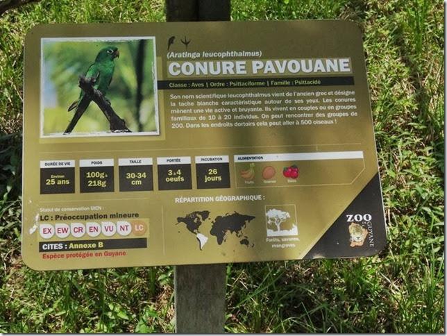 Cayenne_Zoo_DSC08169