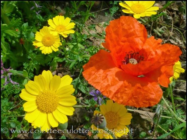 OrtoLà - La fioritura (5)