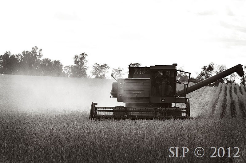 harvest 2012- SycamoreLane Photography