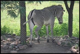 Zoo5 053