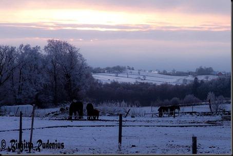 sky_20120125_horses