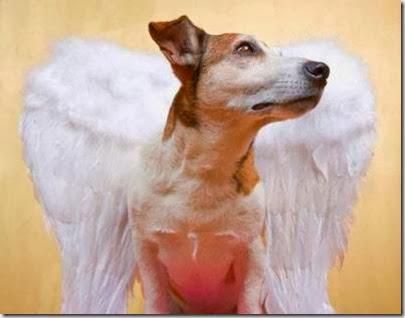 anjo cão