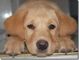 Cronograma de septiembre de esterilizaciones quirúrgicas gratuitas para perrospara caninos[5]_thumb[1]
