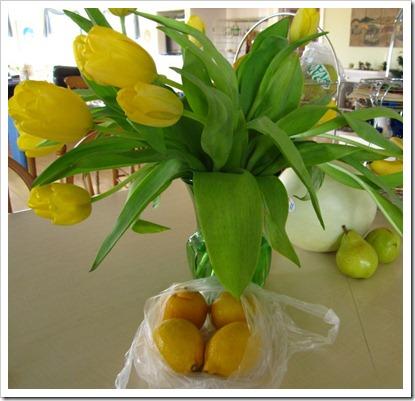 20120318_tulip_004