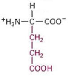 r glutamic acid structure  Glutamic acid