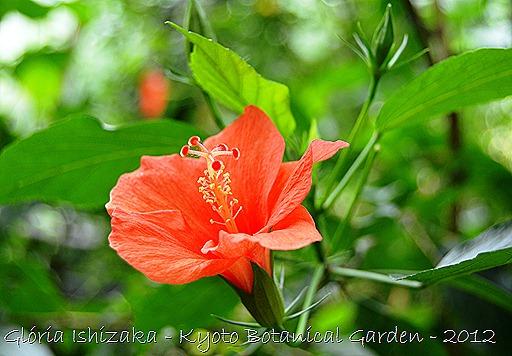 Glória Ishizaka -   Kyoto Botanical Garden 2012 - 1