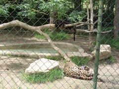 2009.05.22-014 jaguars