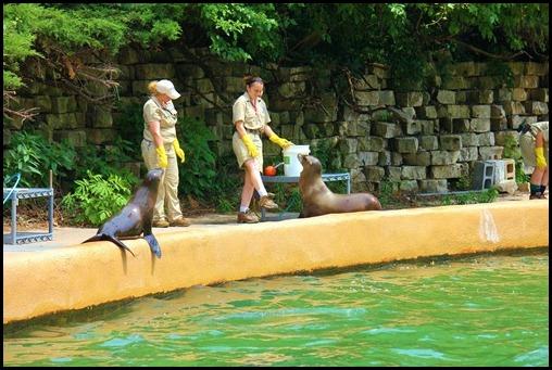 Zoo4 396