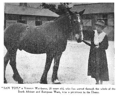 santoy-veteran-war-horse