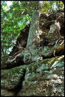 19 - Rock Garden Trail - Trees growing on top of rocks