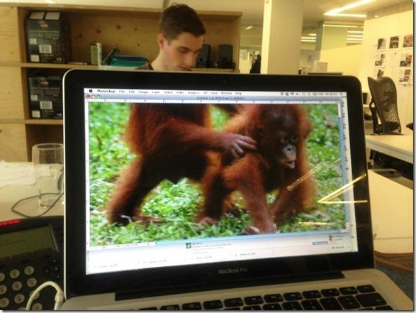 photobomb-coworkers-animal-4