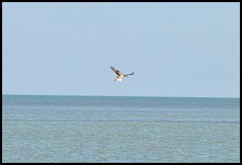 01h3 - Florida Bay
