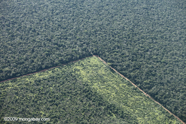 Aerial view of forest edge in Mato Grosso, the Southern Amazon. Photo: mongabay.com