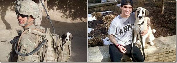 Antes e Depois de Animais de Estimação (20)