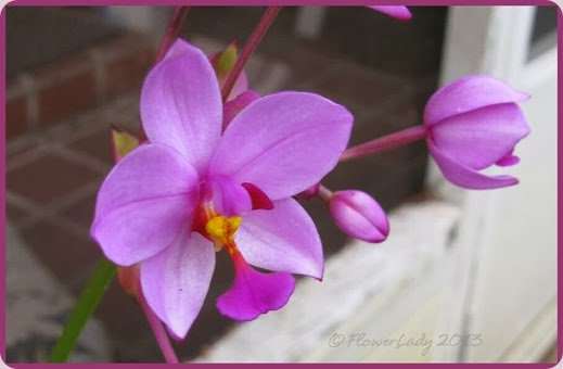 12-15-grnd-orchids