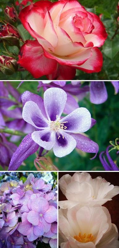 mumsflowers1
