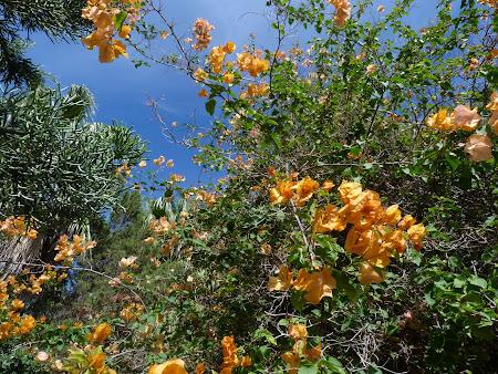 Gradina botanica: flori Porto Santo