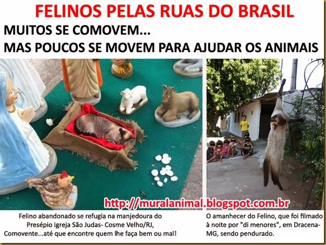 felinos_ruas_brasil