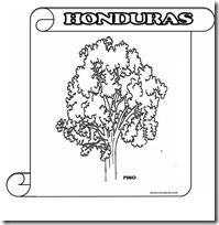 PINO HONDURAS F 1