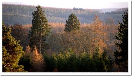 7 Dec 11 01-01-2012 14-28-49.ORF