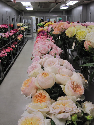 A close look at a row of roses.