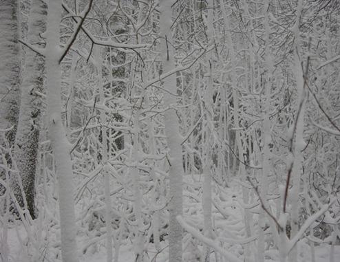 10 skogen