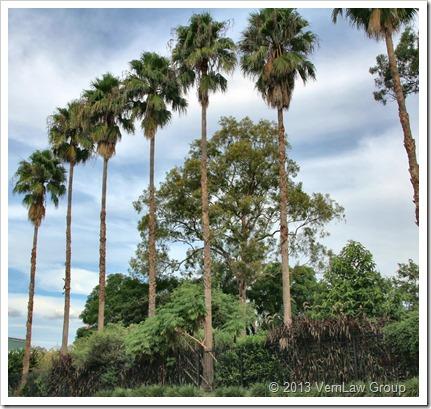 Tall-Palms_IMG_3963