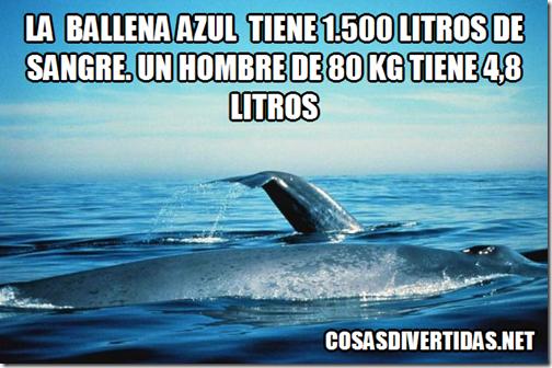 ballrna5 3