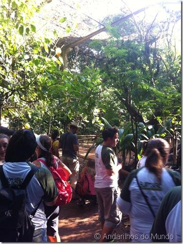 Viveiro Parque das Aves Foz do Iguaçu BlogTurFoz
