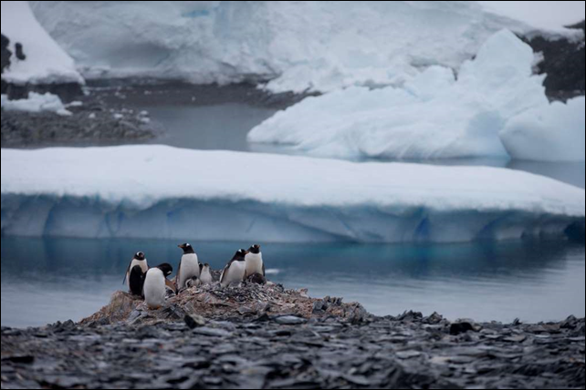 In this 22 January 2015 photo, Gentoo penguins stand on rocks near the Chilean station Bernardo O'Higgins, Antarctica. Here on the Antarctic peninsula, where the continent is warming the fastest because the land sticks out in the warmer ocean, 49 billion tons of ice (nearly 45 billion metric tons), is lost a year according to NASA. From the ground in this extreme northern part of Antarctica, spectacularly white and blinding ice seems to extend forever. What can't be seen is the battle raging thousands of feet (hundreds of meters) below to re-shape Earth. Photo: Natacha Pisarenko / AP Photo