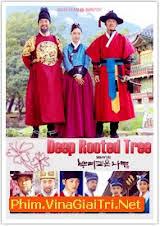 Deep Rooted Tree 2011
